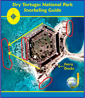 Snorkeling Dry Tortugas Map