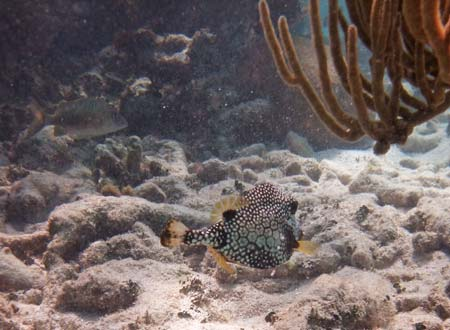 Trunkfish and Sea Rods