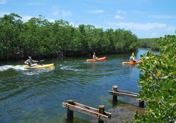 Kayaking through the mangroves at Pennekamp State Park