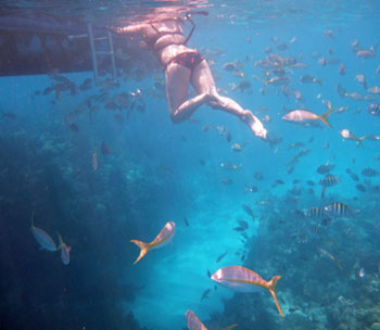 The best Keys snorkeling may be here at Sombrero Reef