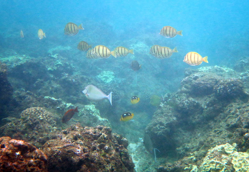 Snorkeling Hideaways Beach with a mixed school of fish.