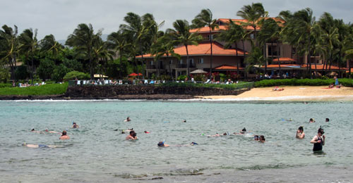 Crowds Of Snorkelers At Poipu Beach Park