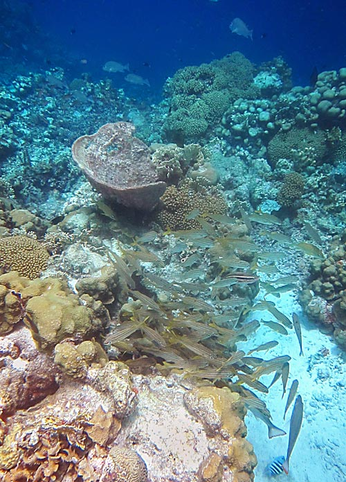 Healthy Reef With Fish Over The Drop Off Klein Bonaire