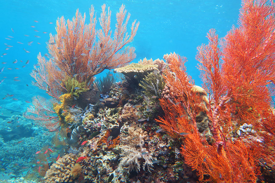The colorful reefs in Komodo also take many forms. This was on the Komodo Resort house reef.
