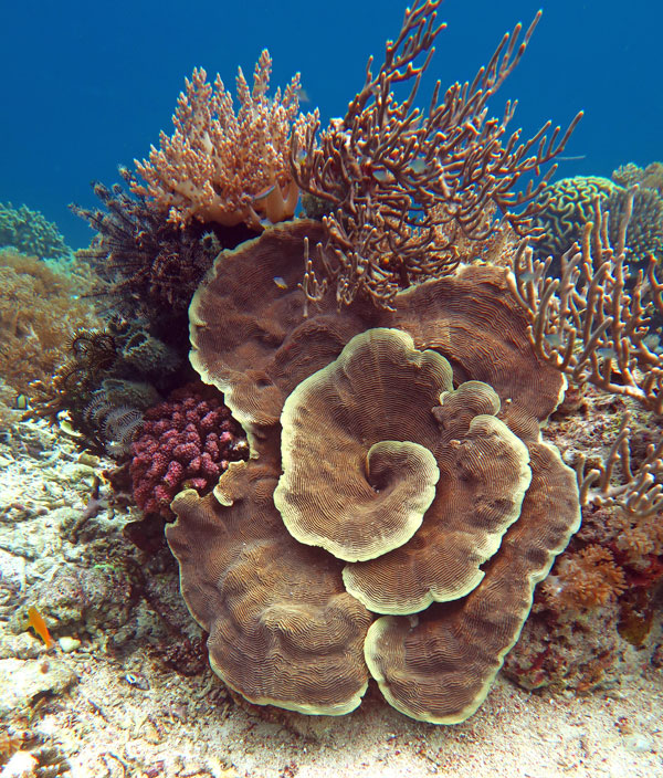 Corals can take lovely forms.