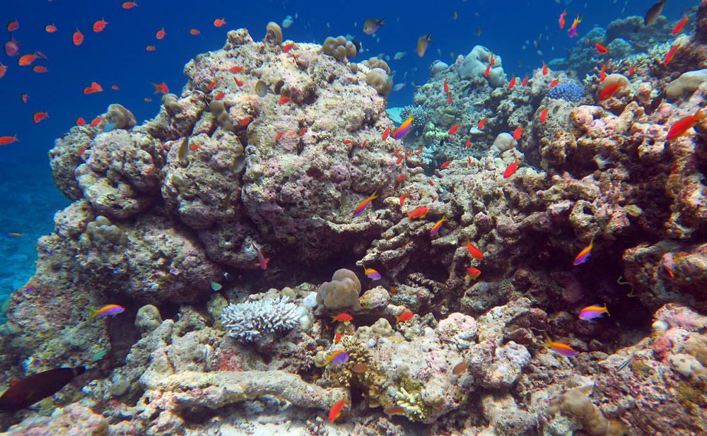 A pretty scene with colorful fish. But the corals are nearly all dead.