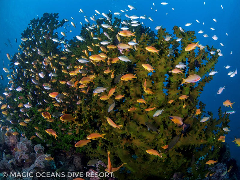 Healthy reefs full of fish are on the agenda for this Philippines snorkeling trip.
