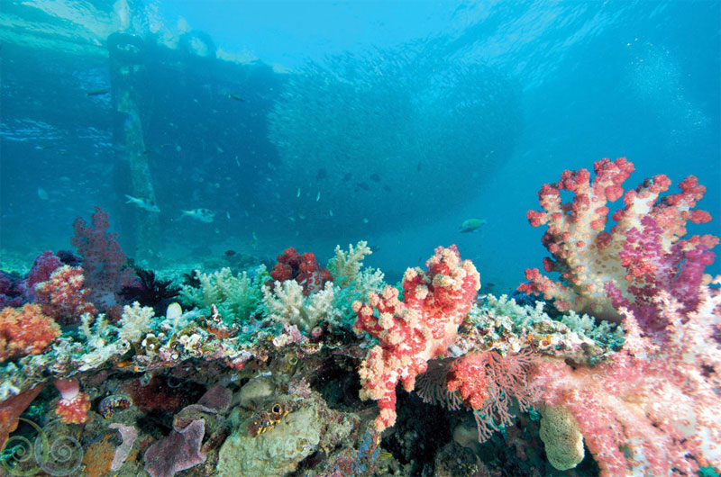 Five times more coral species in a small area of Misool than in the entire Caribbean Sea.