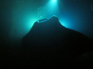 Night Snorkeling with Manta Ray