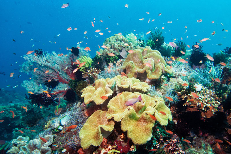 Snorkel the abundant reefs of Borneo from your Nunukan Island home base.
