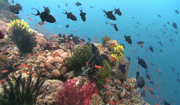From shallow shelf reefs, to deep dropoff walls, you will enjoy a great variety of underwater topography and sea life snorkeling the Philippines.
