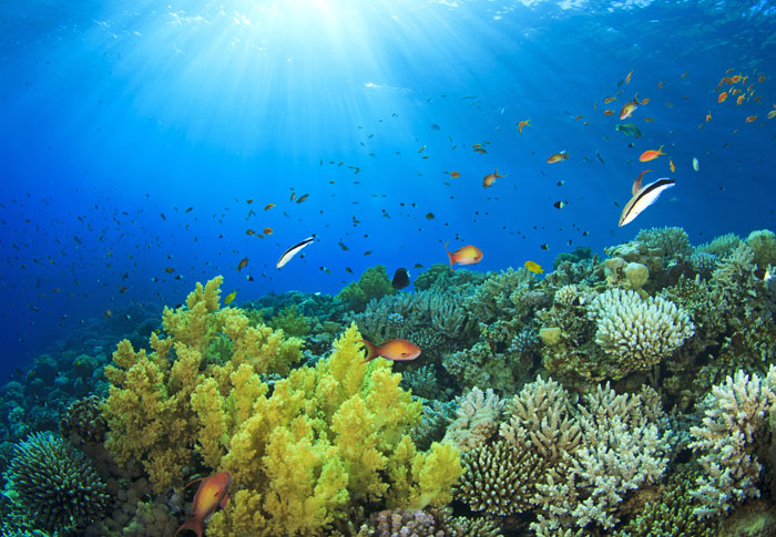 Snorkel lush reefs in clear water in the Philippines.