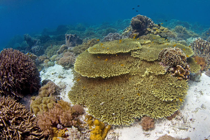 Fields of ancient coral formations can be found at protected sites.