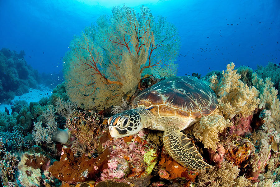 Philippines Liveaboard Snorkeling Trip