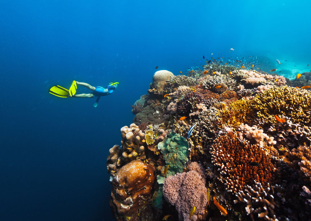 Snorkel healthy colorful reefs like this in the Philippines on this amazing trip.