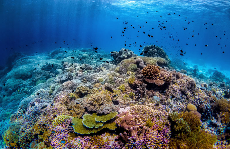 Schools of tropical fish and colorful alive reefs await you in the Philippines.