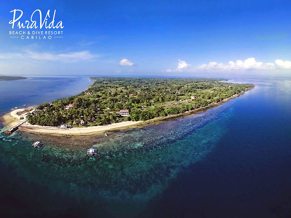 The amazing house reef in front of Pura Vida Cabilao Resort.