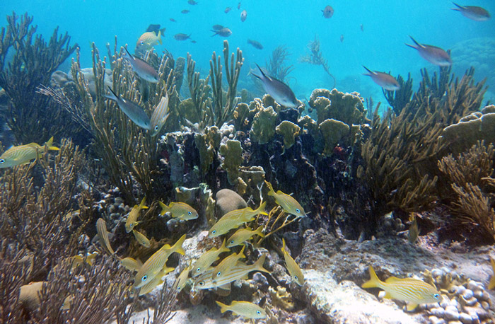 Learn where the healthy reefs full of fish are.