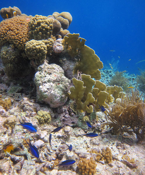 Bonaire has a nice variety of hard and soft corals.