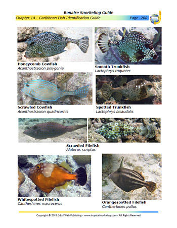 Fish Guide Chapter Sample Page