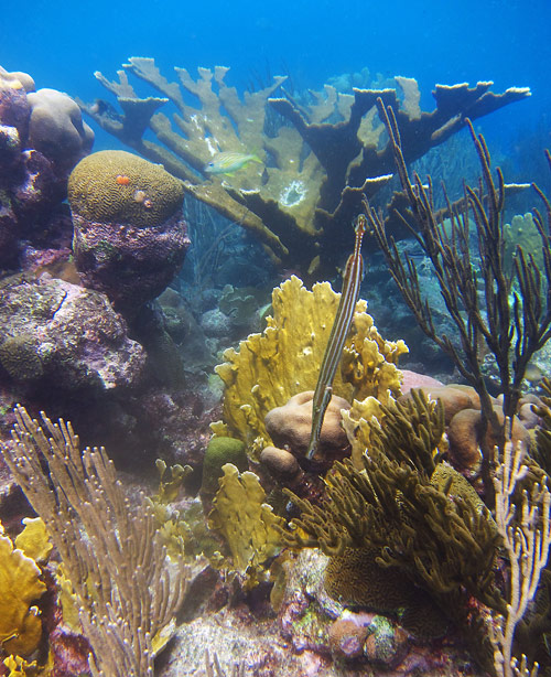 Find The Healthy Coral Reefs On Curacao