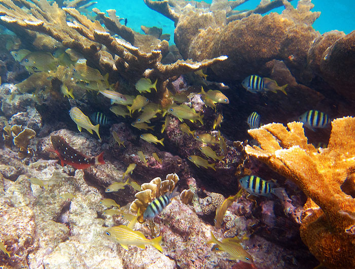 See Schools Of Fish In Healthy Reefs