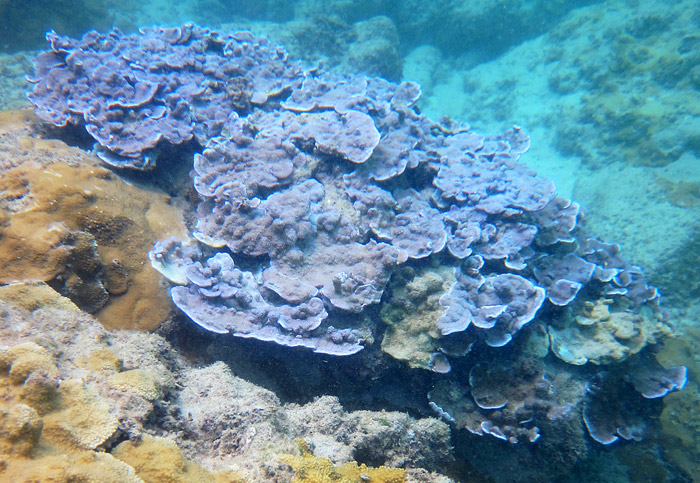 Colorful Corals Too