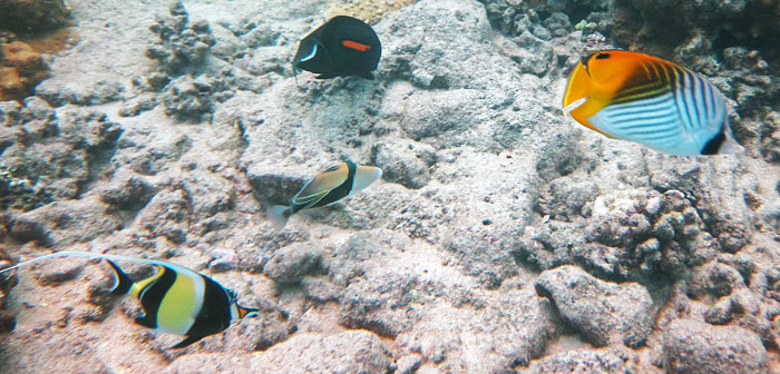 Swim With Diverse Colorful Fishes