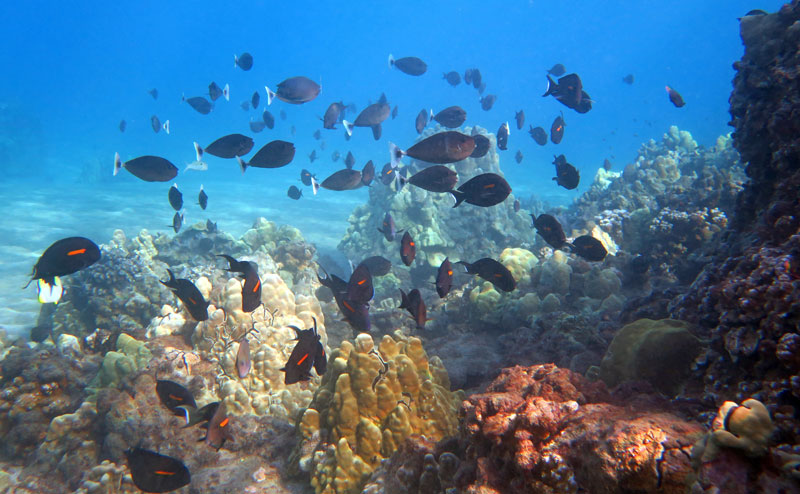 Find Healthy Reefs & Lots of Fish