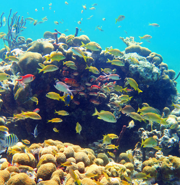Explore Healthy Reefs Full Of Fish