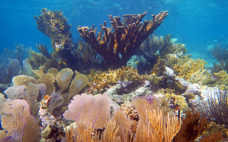 There Are Still Many Dense Reefs Like This On St John, If You Know Where To Go