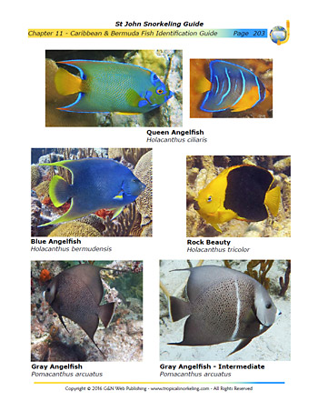 Fish Guide Sample Page