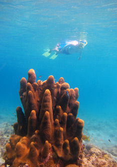 Snorkeling Photography