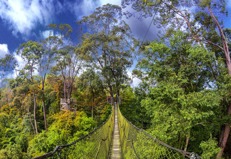 Visit the beautiful rainforest of Borneo.