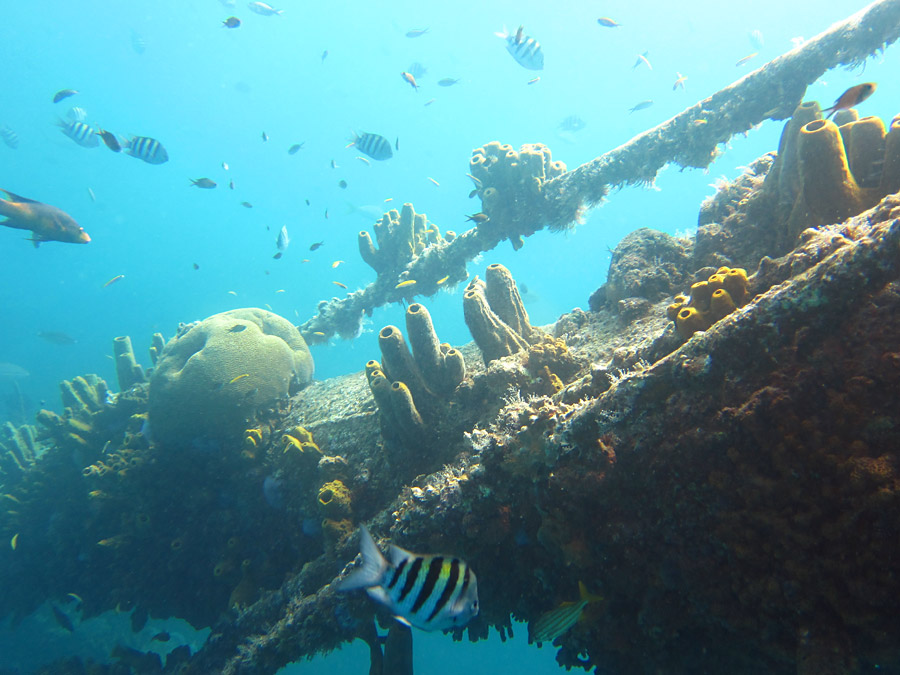 Fish, Corals & Sponges We Saw While Snorkeling The Antilla Wreck