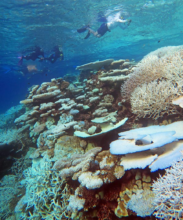 Maldives 2016 - A heavily bleached reef that happened in just weeks across much of the country due to global warming.