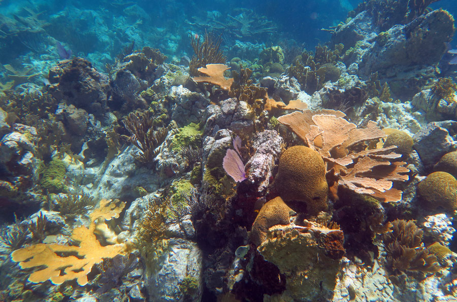 Interesting reef with fun topography awaits you at Kiddel Bay
