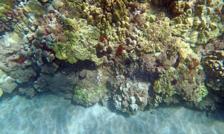 Poolenalena Coral Reef with Red Pencil Urchins