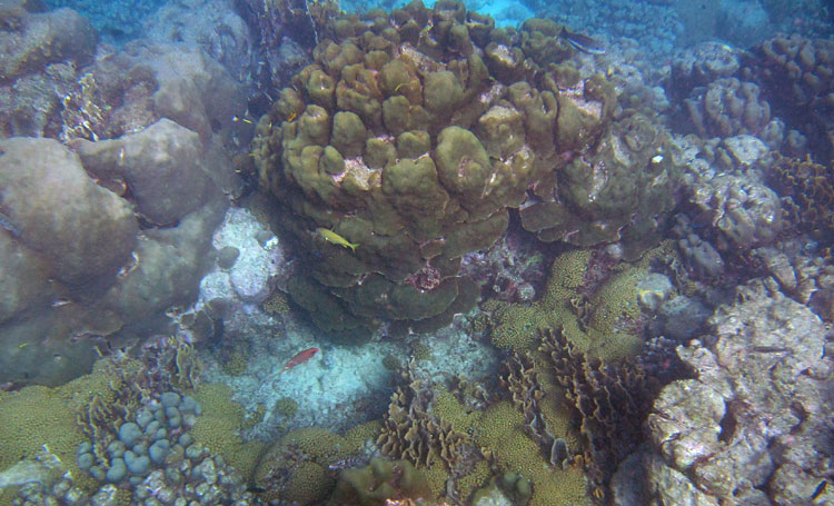 Wonderful Corals We Saw Snorkeling Puerto Chiquito