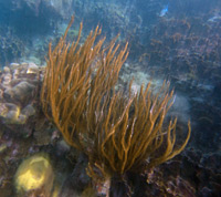 Soft Corals Are On The Reef Here Too