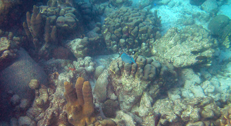 Pillar And Star Corals