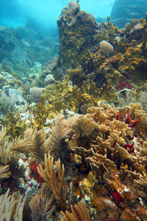 Lively reef on the farther rock island Salt Pond Bay