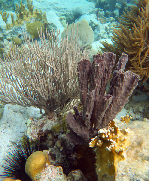 Urchin and sponge at Waterlemon Cay