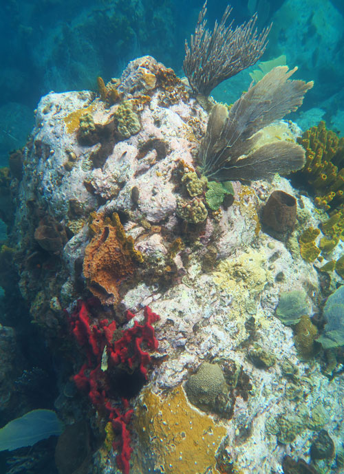 St Lucia's fringing reefs feature large boulders encrusted with colorful sponges, soft corals and a few hard corals.