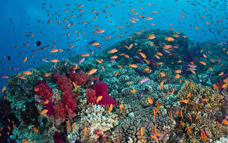 Fiji reef teeming with fish.
