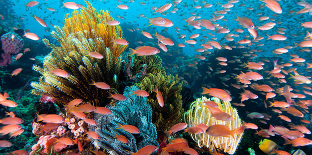 Read all about this Wakatobi Resort snorkeling trip opportunity.