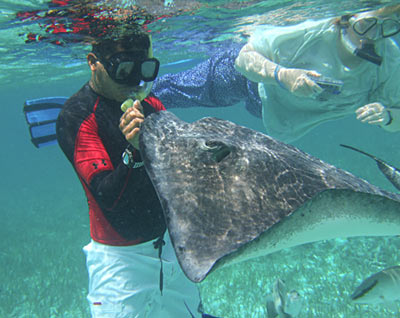 Guide feeding ray while snorkeling Shark Ray Alley - Belize