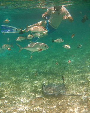 Ray and fish with snorkeler