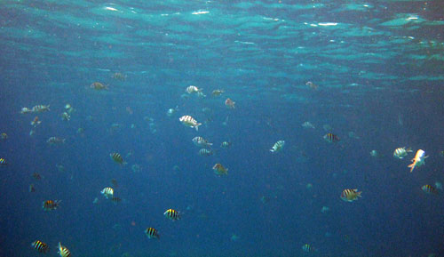 School of Mixed Sergeants at Kahe Point