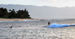 Surfers On Oahu's Famous North Shore